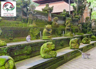 با جنگل میمون اوبود بالی بیشتر آشنا شوید