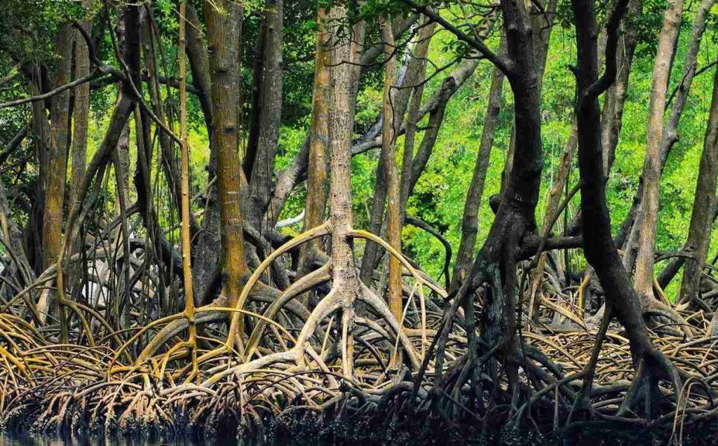 جنگل حرا