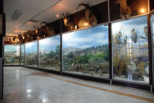 Qeshm Geopark Museum