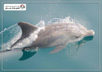 خلیج دلفین دبی